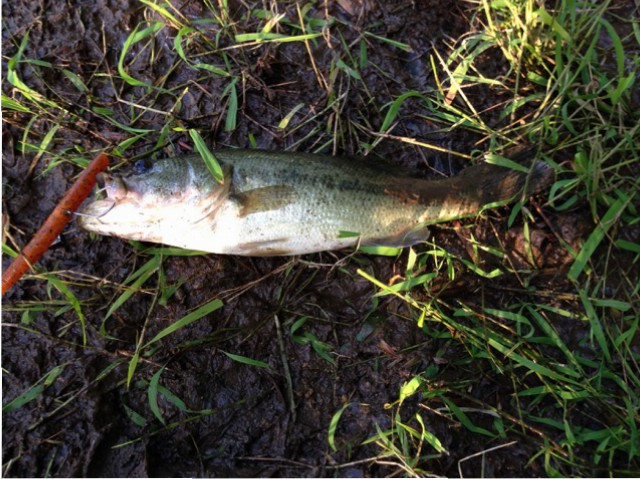 Back for Catfish…but catching Bass!   Delaware Bass